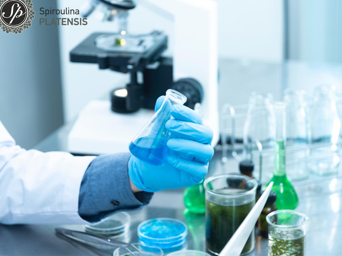 Χέρι με μπλε γάντι σε εργαστήριο που κρατάει γαλάζιο μπουκαλάκι με φυκοκυανίνη και υπάρχει φαρμακευτικό δοχείο με σπιρουλίνα σε υγρή μορφή