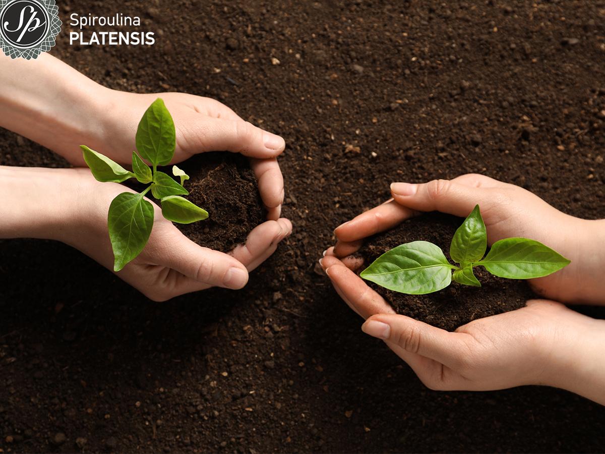 Δύο χέρια που κρατάνε ένα μικρό φυτό με χώμα