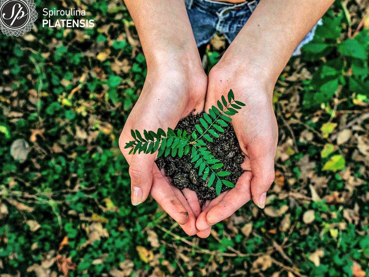 Δύο χέρια με χώμα και ένα πράσινο φυτό μέσα